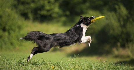 Top 10 ways to exercise with your dog