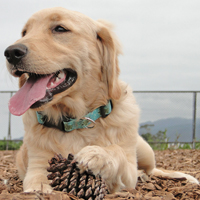 A Dream Dog Park is just a vote away