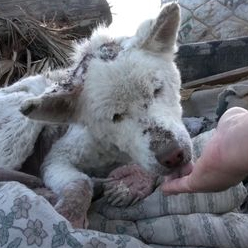 Dog rescued from trash heap makes miraculous recovery