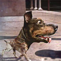 Super Bowl teaser: Save the Doberhuahua