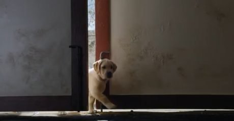 """Budweiser's adorable """"Puppy Love"""" Super Bowl commercial"""