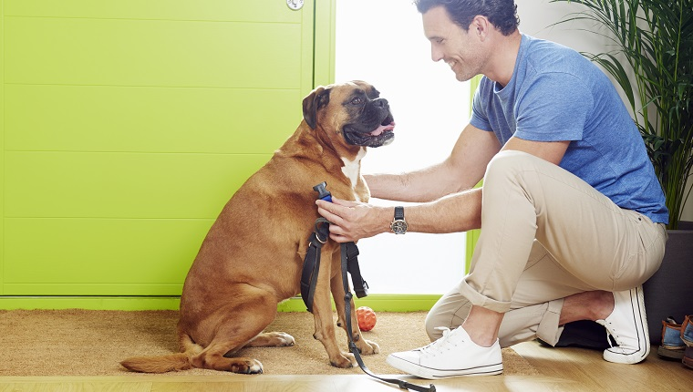 Man at door putting leash on dog to go for walk