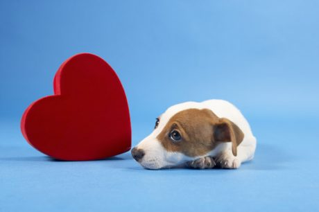 Keep Your Dog Safe This Valentine's Day