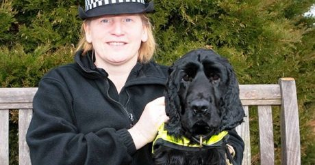 Rescue dog turned police canine retires