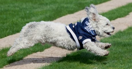 Stray dog becomes Brewers' best friend