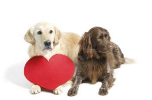 Ten Ways To Show Your Dog You Love Them On Valentine's Day