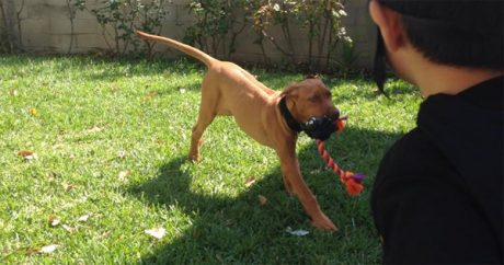 Rescue group and two families fight over fate of lost dog