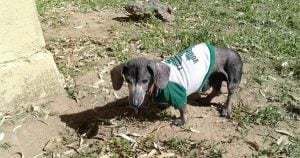 Senior Dachshund found outside shelter with heartbreaking note