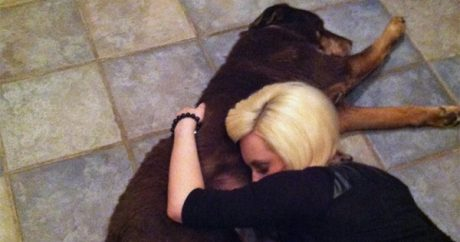 Memorial held for Denver dog hit by car and left to die by police