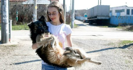 Determined teenager uses Facebook to save Romania strays