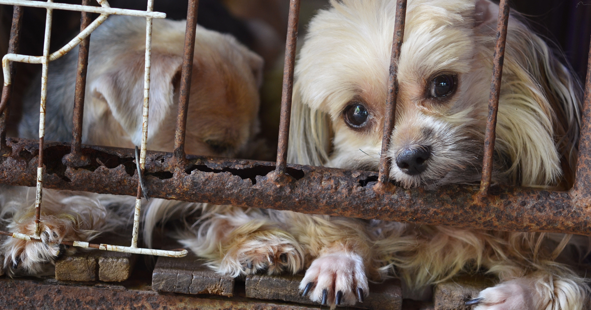 Hsus Releases List Of 101 Problem Puppy Mills In The U S