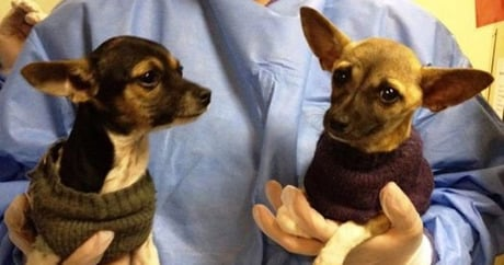 Researchers May Have Stumbled Upon Cure For Parvovirus Dogtime