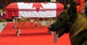 K-9 cries beside coffin of slain Mountie partner