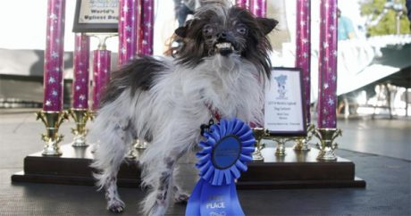 Mutt wins World's Ugliest Dog Contest 2014