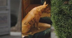 """Free"" abandoned dog finds forever home"