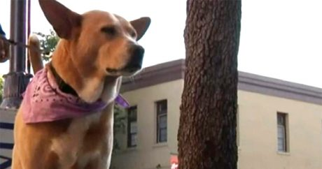 """Owner of """"free"""" abandoned dog comes forward"""