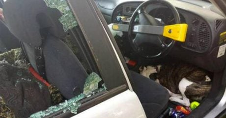 Police officer Tweets dog rescued from hot car
