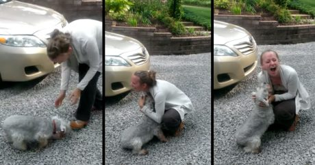 Dog passes out with joy during happy reunion with owner