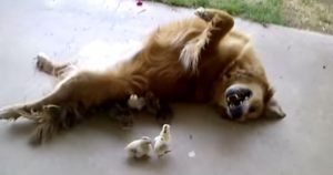 Dog is a chick magnet