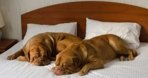 A guide to pet-friendly hotels