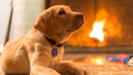 Save A Life! National Pet Fire Safety Day Tips To Keep Your Dog Safe