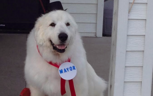 Dog elected mayor in Minnesota