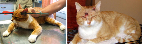 Ten amazing before-and-after pet-recovery pictures - Dogtime