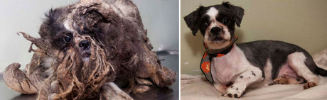 Ten Amazing Before And After Pet Recovery Pictures Dogtime