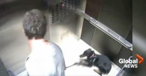 CEO who abused dog in elevator resigns