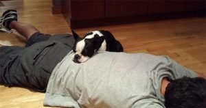 Dog's first snuggle with new owner