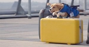 Great Idea: Dog Is A Moving Lost And Found