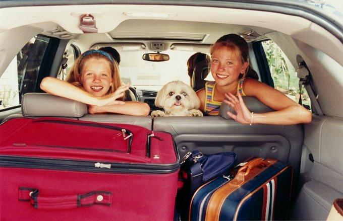Behavior to watch for in your dog while traveling include excessive drooling, listlessness, uneasiness, and more — these could be signs of car sickness. (Picture Credit: Getty Images)
