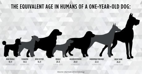 """Flaws in the 7-year rule: How accurate are """"dog years?"""""""