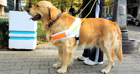 Top 10 Service Dogs Dogtime