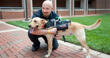 New tech. helps communication between people & dogs