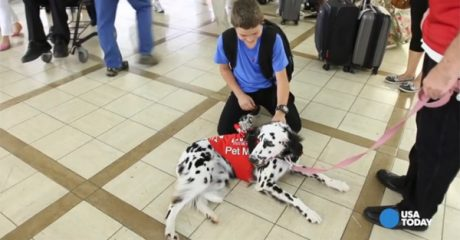 Therapy dogs welcome weary travelers at LAX