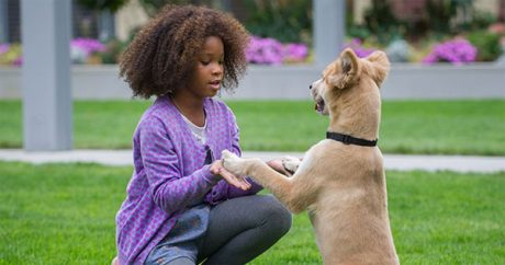 "Sun comes out for mutt playing Sandy in new ""Annie"" movie"