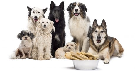 Top 10 most popular dogs of 2014