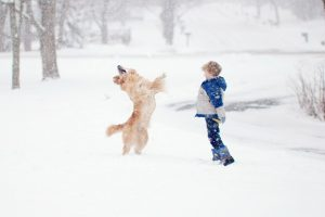 Keep Your Dogs Safe During A Blizzard