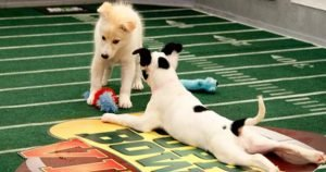 Puppy Bowl locker room live stream