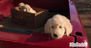 GoDaddy pulls controversial Super Bowl XLIX puppy spot