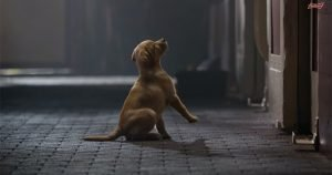 Five of the best Super Bowl commercials featuring dogs and cats