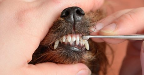 The Tooth Fairy helps homeless dogs and cats