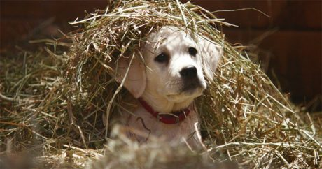 """Budweiser's """"Lost Dog"""" Super Bowl commercial ranks number one"""