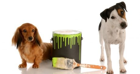 Dog takes up painting, works sold online