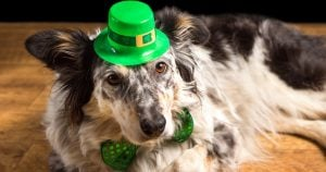 6 Best Dog Breeds To Celebrate St. Patrick's Day With
