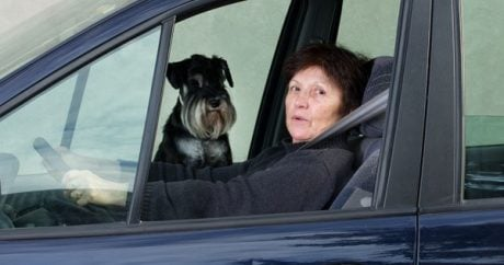 Dog Seat Belts: Is It OK For Your Dog To Ride Shotgun?