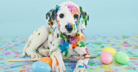 25 Dogs Who Are Posing For Their Easter Greeting Cards