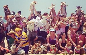 Biggest So Cal Corgi Beach Day Ever: 500+ Corgis