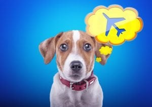 How To Plan A Safe, Smart International Relocation With Dogs